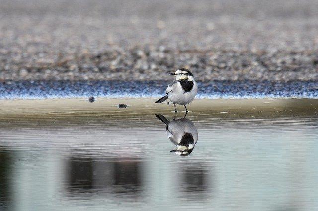 水面に映る鳥