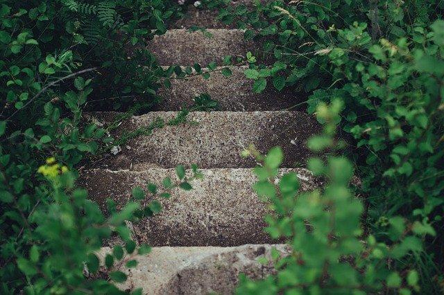 雑草と階段