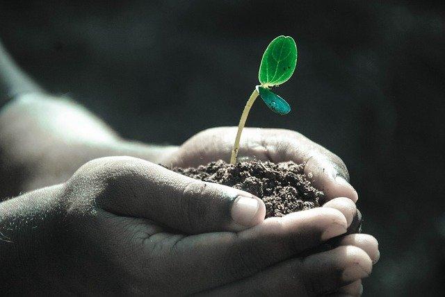 土と芽を覆う手